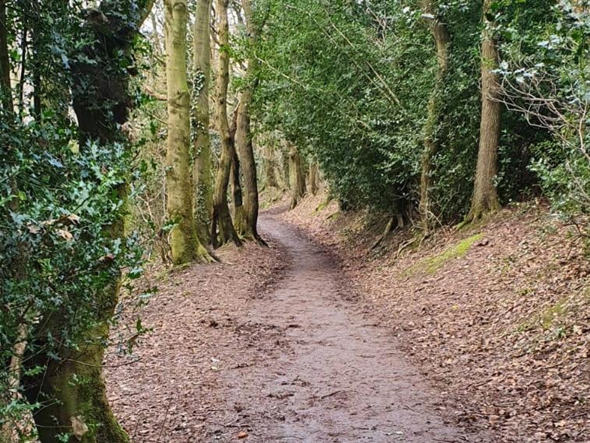 Campaign hopes to raise £20,000 to save much-loved Sheffield woods from 'big-boy developers'