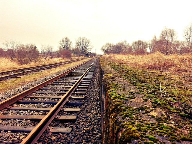 The dog was killed on the railway tracks between Wombwell and Barnsley