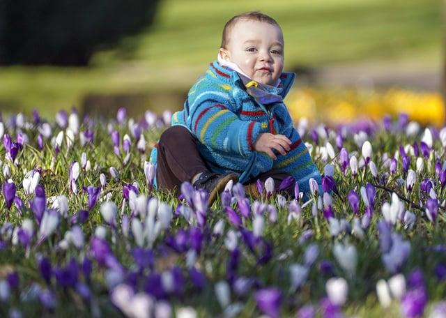 Spring in Hillsborough Park. 16-month-old Adur Fuertes enjyos the sun. Picture Scott Merrylees.