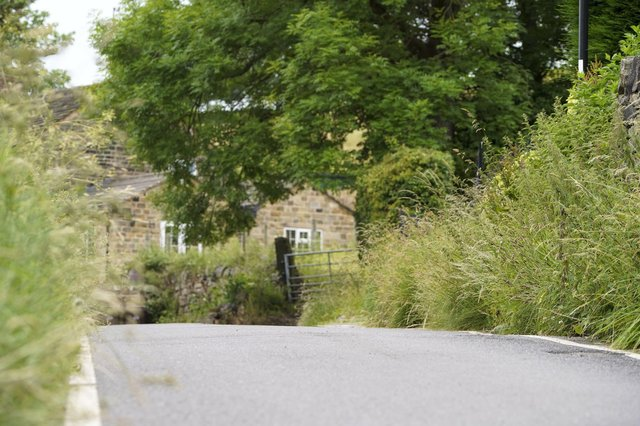 Overgrown foliage Tofts Lane. Picture Scott Merrylees