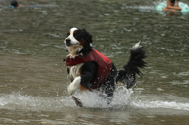 Here is everything you need to know about keeping your pets cool as temperatures soar and Sheffield experiences a heatwave. Photo by Buddhika Weerasinghe/Getty Images.