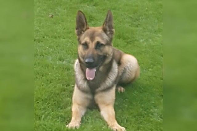 Police dog Quinn
