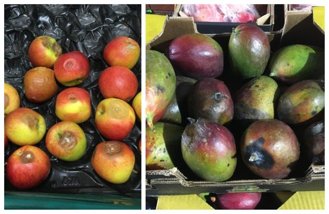 Some of the rotten fruit found for sale at the Sheffield branch of Total Produce Limited (pic: Animal and Plant Health Agency)