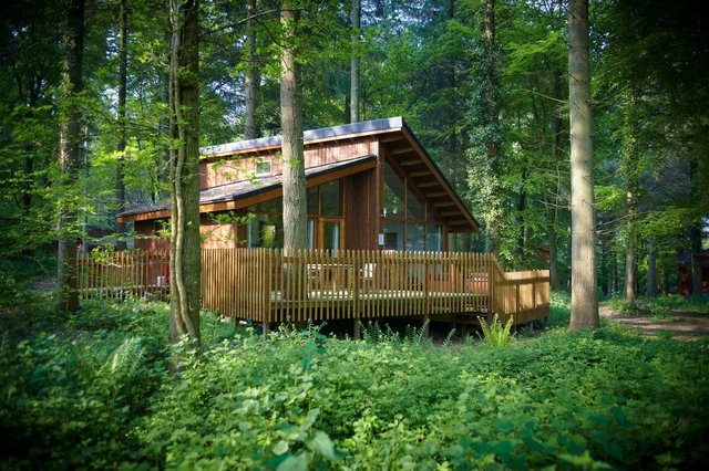 One of the luxurious forest cabins.Image: Forest Holidays