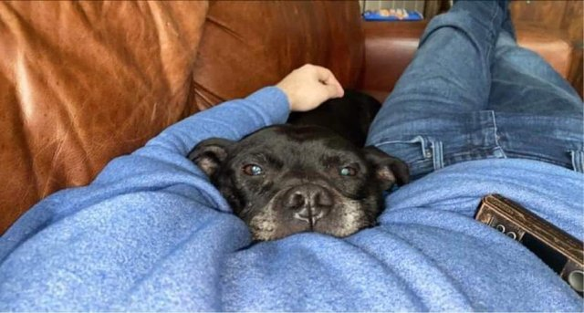 Buster the dog enjoying some much-needed TLC with his new foster dad in Sheffield (pic: Helping Yorkshire Poundies)