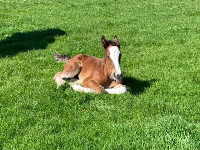 The new filly foal.