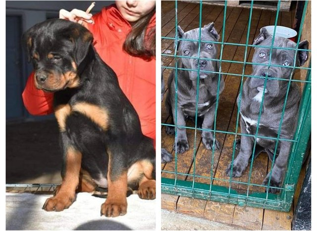 Three pups were stolen in a gunpoint robbery in Burngreave, Sheffield.