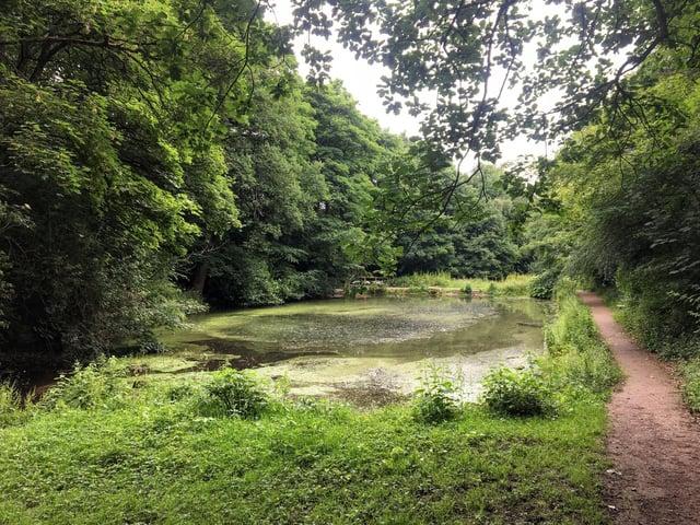 Birley Spa. Picture: Molly Williams