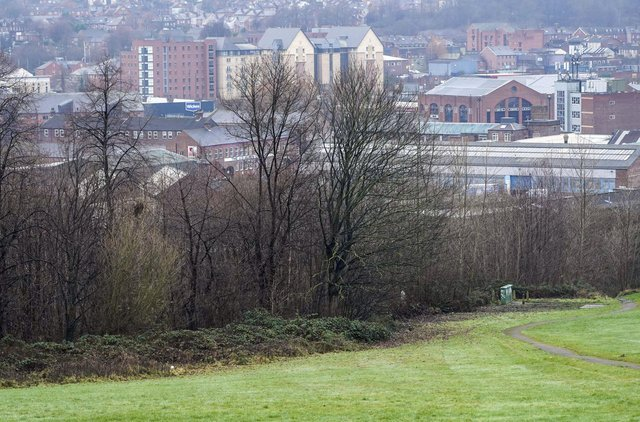 Sheffield Green Parents are calling for an ecological or biodiversity emergency. Picture Scott Merrylees