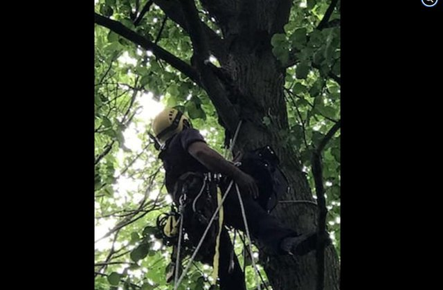 South Yorkshire firefighters rescured this cat that was stuck up a tree