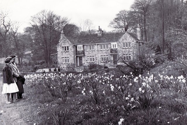 An attractive scene outside Whirlow Brook Park where 'a host of golden daffodils' make an eye-catching display in April 1960