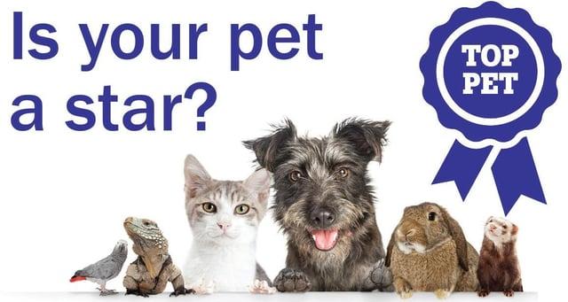 Is your pet a 'Top Pet 2021' contender?