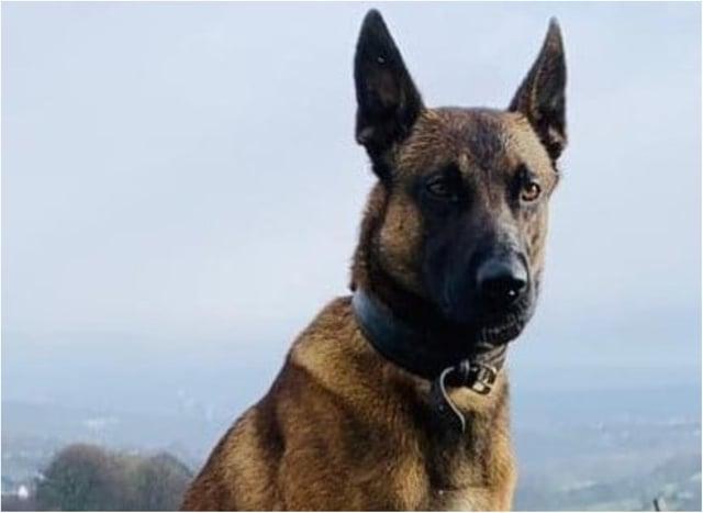 Police dog Vinnie