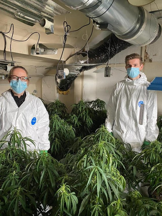 £250,000 worth of cannabis plants were recovered.