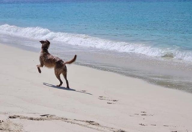 Angus the lurch on the beach